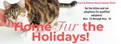 No Fee Adoptions for Qualified Adopters 11/10 through 11/18